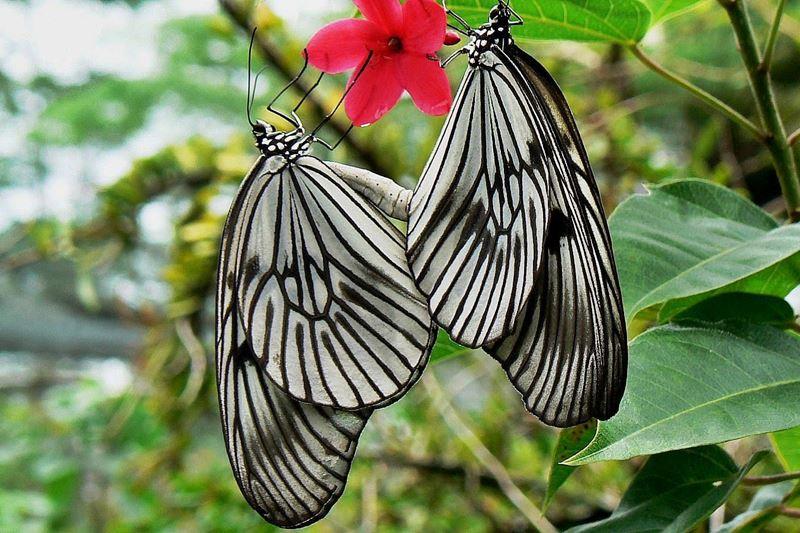 Bali Butterfly Park 4