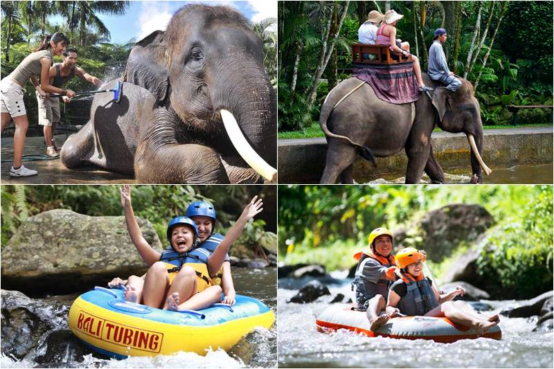 Bali Bathing Elephant and Tubing Tour 5