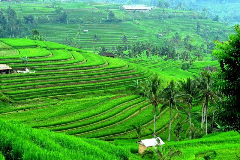 4 Days Bali Land Tour 14