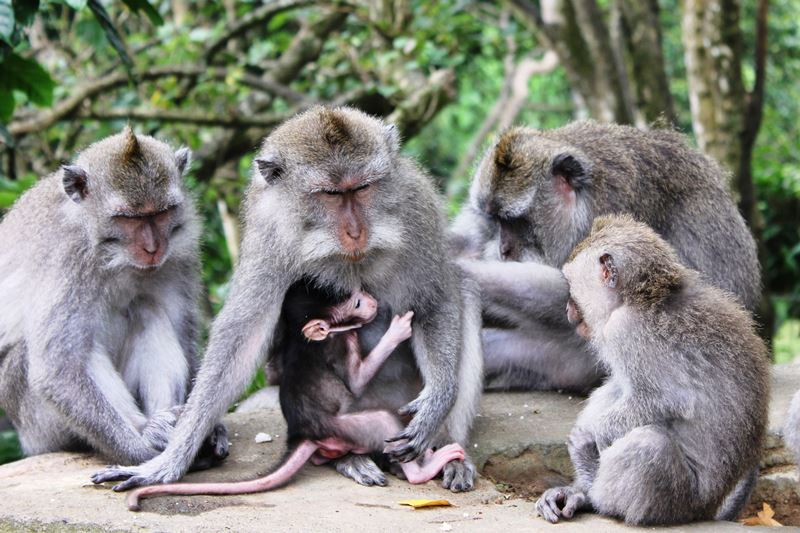 Ubud Monkey Forest 10
